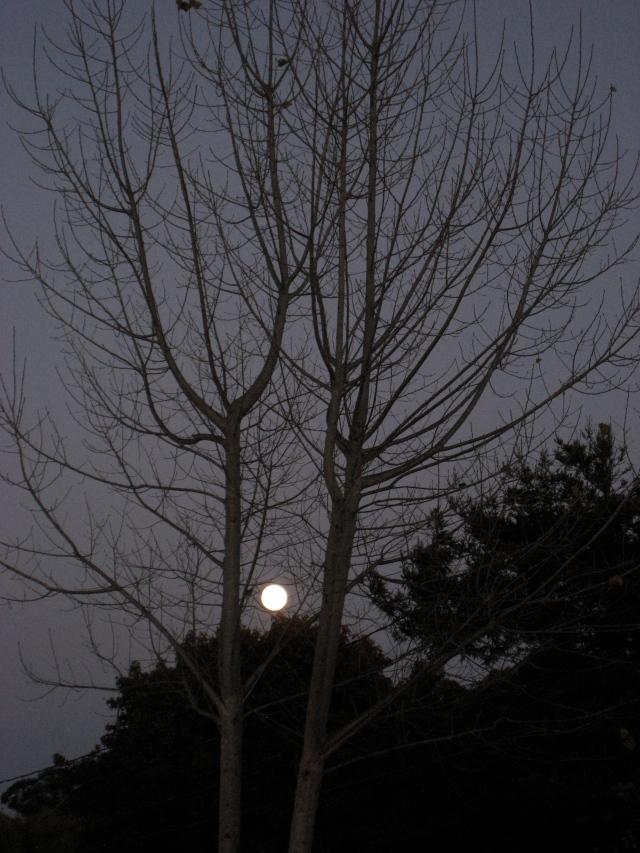 Nearby Moon