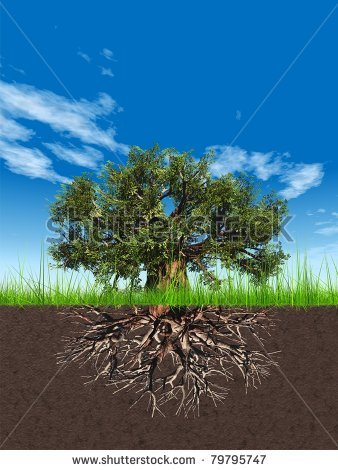 old-baobab-tree-with-roots-in-earth-and-a-beautiful-blue-sky-background-with-clouds-79795747