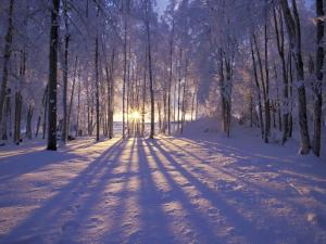 winterforestlight
