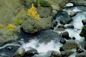 Rivers_and_Streams_river_pic